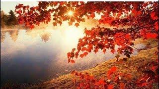 Good morning Whastapp  video. Bolo shyam shyam shyam radhe radhe name song and Shyamaro Bashi Baje