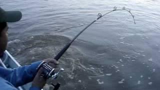 pescaria de pirarara no rio araguaia