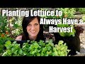 How To Plant Lettuce Seedlings Seeds To Always Have A Harvest Spring Garden Series 6 mp3