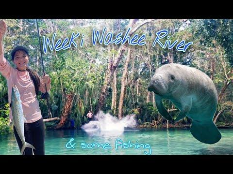 Kayaking At Weeki Washee River And Fishing