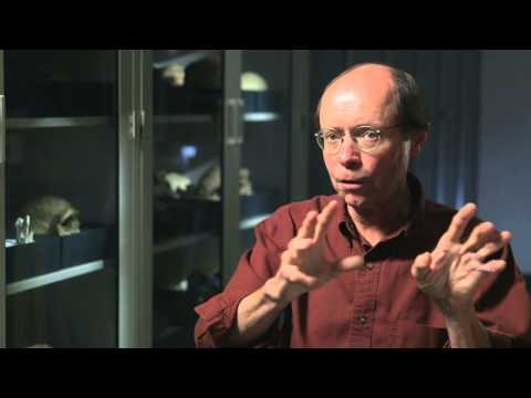 Tim White on the Intersection of Anthropology and Paleontology— HHMI BioInteractive Video
