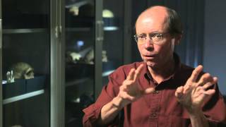 tim white on the intersection of anthropology and paleontology hhmi biointeractive video
