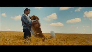 Собачья жизнь 2 | русский трейлер | Дата выхода 17 мая 2019