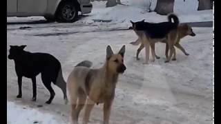 Собаки покусали ребенка