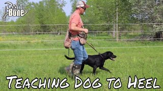 Teaching a Dog to Heel: Stop Pulling on Lead