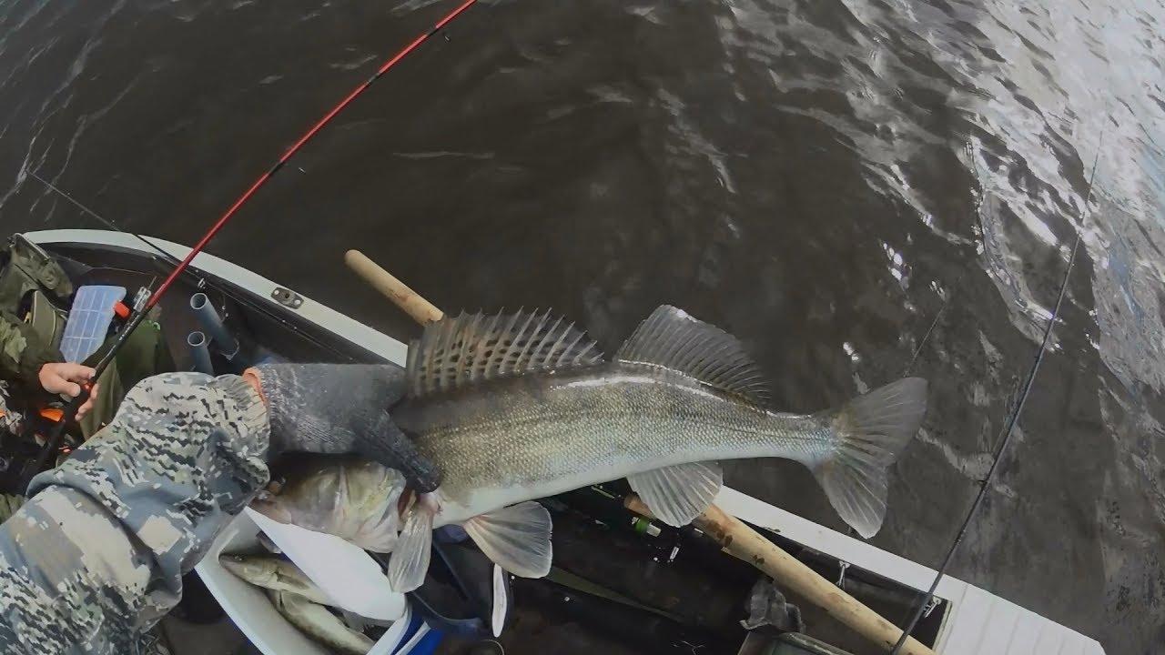 диалоги о рыбалке судак летом