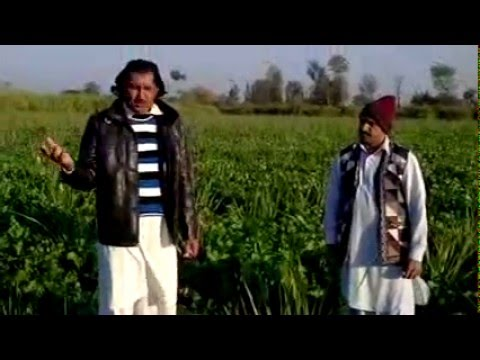 Organic Agriculture by Fazal Hussain and Sharafat