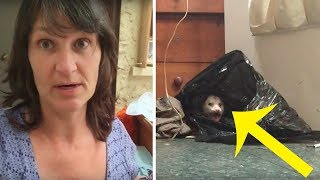 Woman Hears A Strange Noise In The Closet And Finds A Whole Family Living Inside