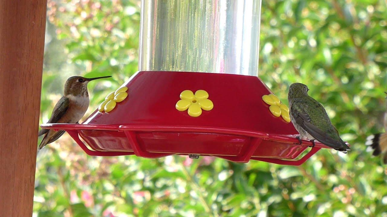 gallon plastic outdoor deck one pdx wayfair perky pet double hummingbird feeder