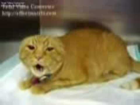 CAT++قط متوحش
