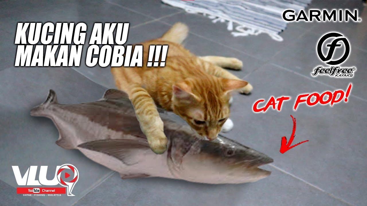 [CATCH&COOK] - Cara Buat WETFOOD Kucing - #VLUQ221