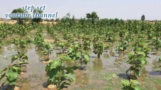 तीन करोड़ की कमाई वाली मुनाफे वाली खेती एक एकड़ जमीन केवल