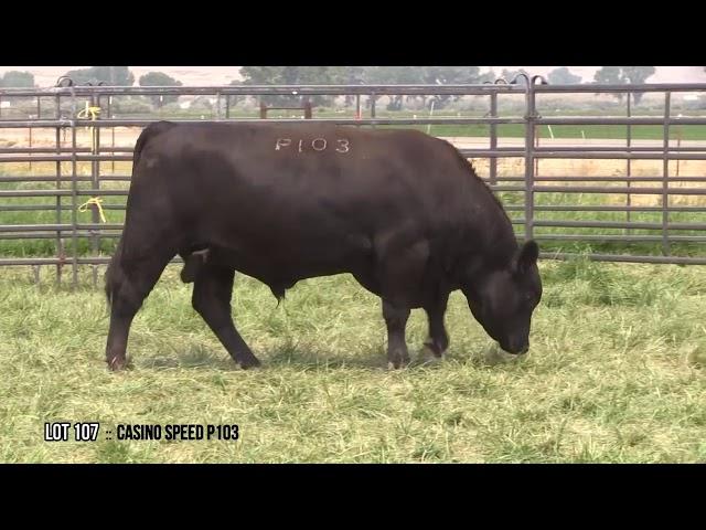 Dal Porto Livestock and Rancho Casino Lot 107