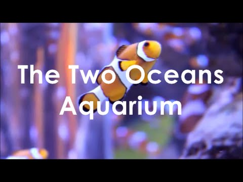 THE TWO OCEANS AQUARIUM