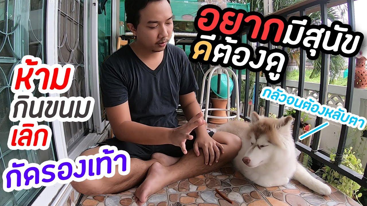 ห้ามกัดรองเท้า อยากมีหมาดีต้องดู ฝึกให้สุนัขรู้จักการห้าม (ปัญหาจากทางบ้าน) - Gatang Style