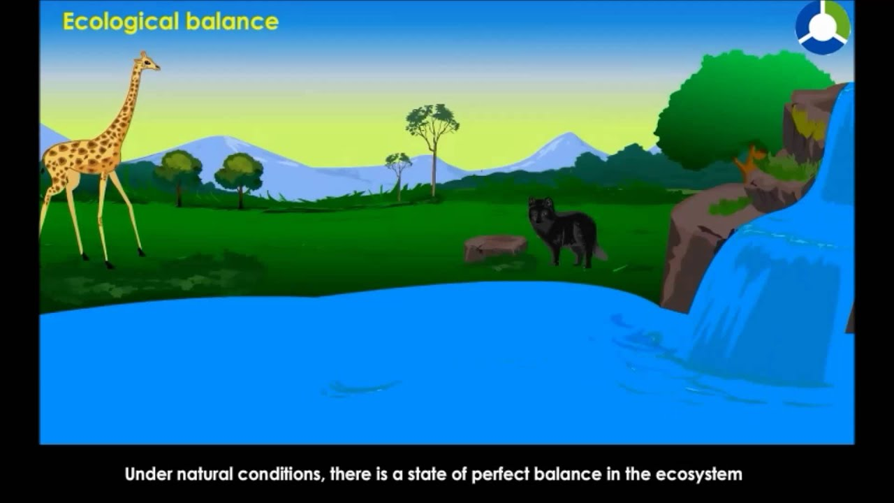 the balance of nature essay What's a good topic about animal science that i could write a research paper on #help saving the self in the age of the selfie #essay via @theamscho #tech #digital #socialmedia #identity #longread small essay on a stitch in time saves nine analysis of an argument essay vocabulary essay on national integrity in marathi.