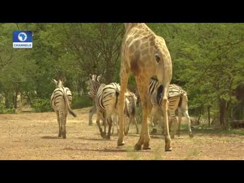 Eye Witness: Exploring Yankari Game Reserve & Sumu Wildlife Park Pt 2