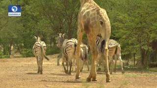 Eye Witness: Exploring Yankari Game Reserve & Sumu Wildlife Park Pt 2