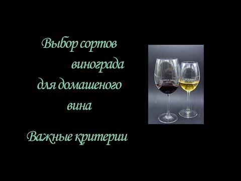 Выбираем винные сорта винограда. Критерии