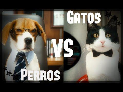 Perros VS Gatos!! Quien es mas Gracioso