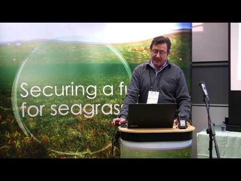 SEAGRASS FUTURE Prof Carlos Duarte Securing a future for seagrass meadows