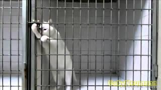 Lustige Videos Zum Totlachen _ Lustige Katzen Videos _ Witzige Katzen #19