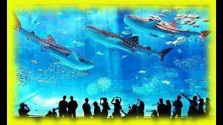 Путешествие на Окинаву: океанариум, отель, гавайские танцы, завтраки