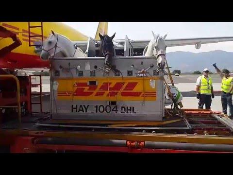 Exportación  de Caballos Costa Rica/México EKUS 506