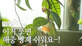 식물 벌레 해충 퇴치법   총채벌레, 응애, 온실가루이…
