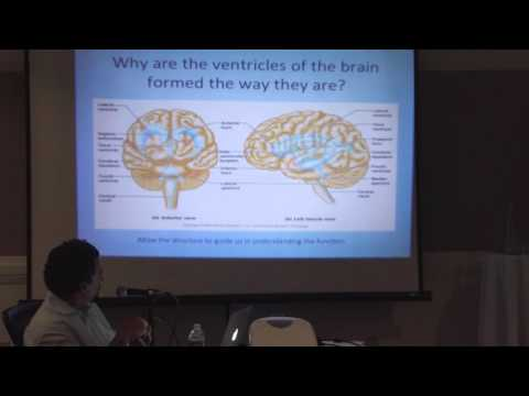 The Cerebrospinal Fluid & the Fluid Nature of Consciousness