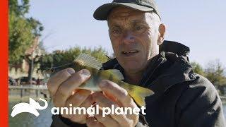 Fishing for Bait on Lake Garda | Jeremy Wade's Dark Waters