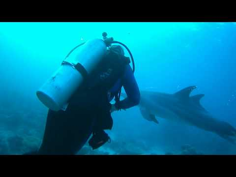 Diving with dolphins at Shaab Ali, complete dive