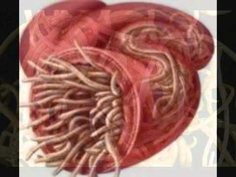 El tratamiento de las lamblias intestinales