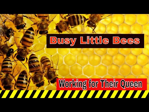 Busy Bees Since 1833