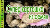 Картофель. Самые урожайные сорта. - YouTube