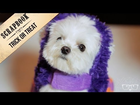 Milo puts on so many costumes! | Trick Or Treat