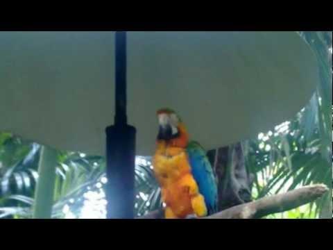 Costa Rica - Zoo Ave : À la découverte des animaux du Costa Rica