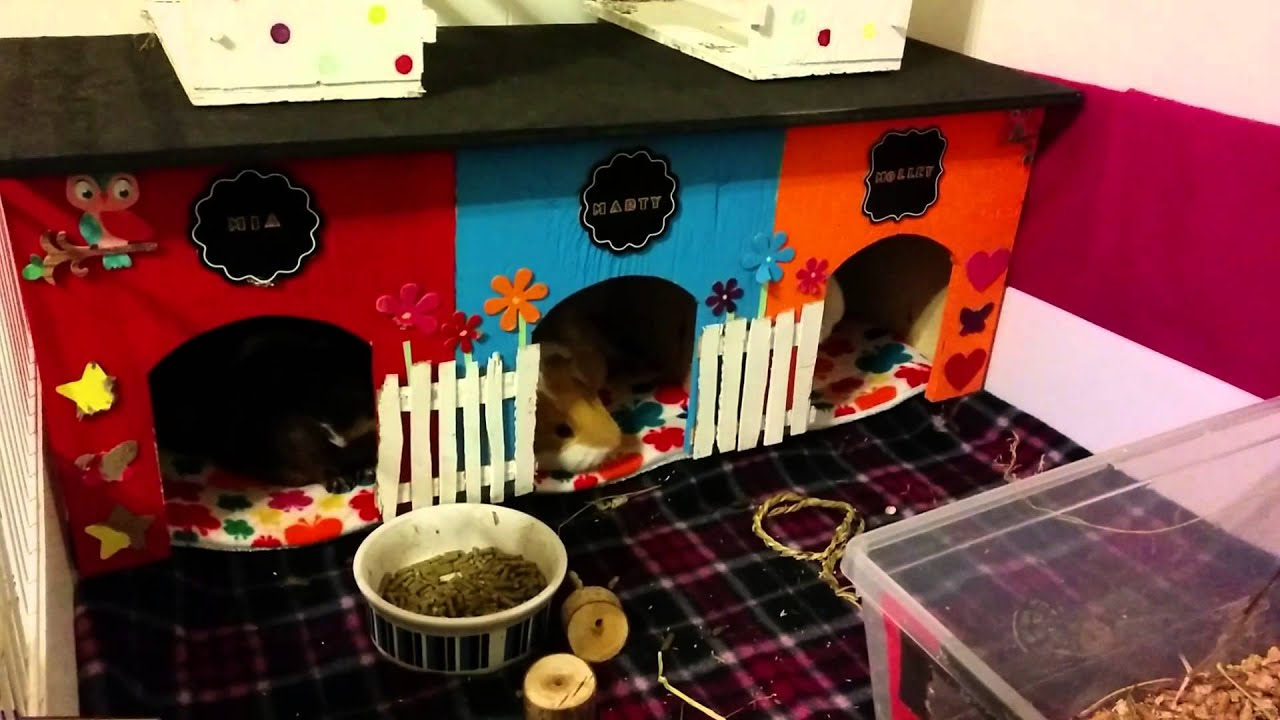 guinea pig house diy tutorial youtube
