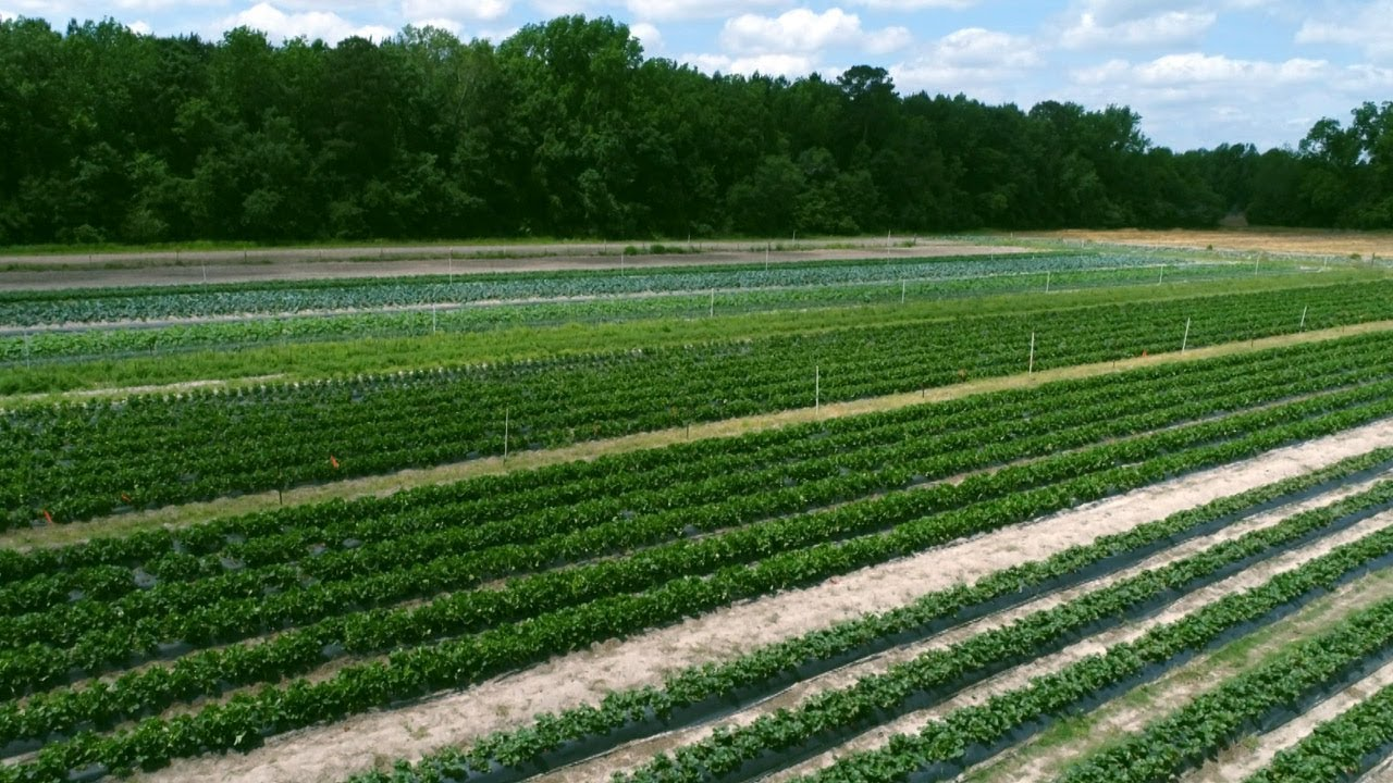 Dorr Farms - Gable, SC