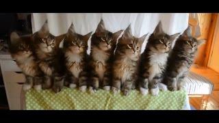 Смешные кошки. Подборка прикольного видео про котов. / Funny cats compilation.