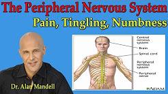 hqdefault - Back Pain Central Nervous System