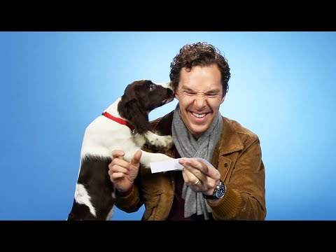 Benedict Cumberbatch Plays With Puppies While Answering Fan Questions