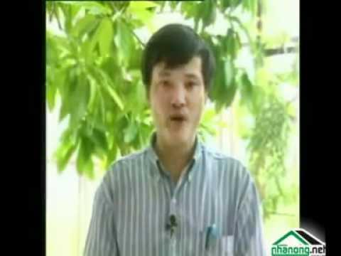 Hướng dẫn kỹ thuật thu hoạch nấm rơm - 03