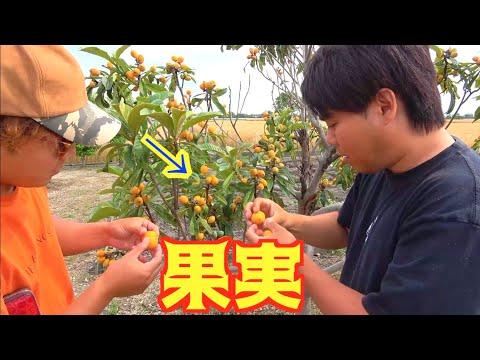 庭に生えてる木の実を食べる
