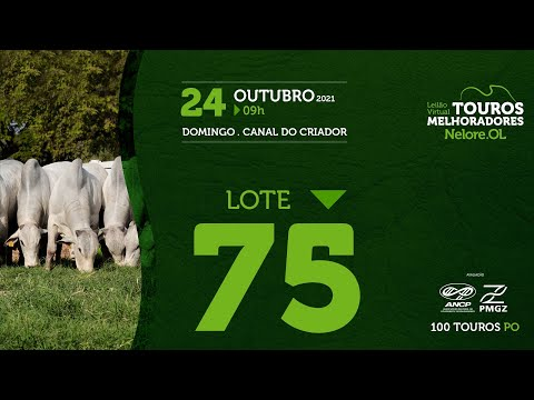 LOTE 75 - LEILÃO VIRTUAL DE TOUROS MELHORADORES  - NELORE OL - PO 2021