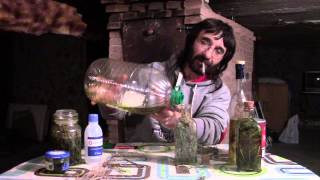 Cómo hacer aceite vegetal de marihuana.
