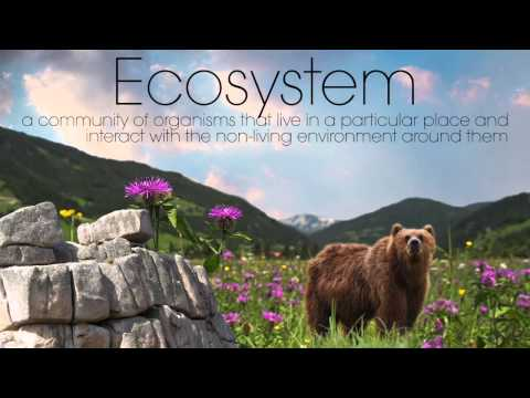 Ecology 101