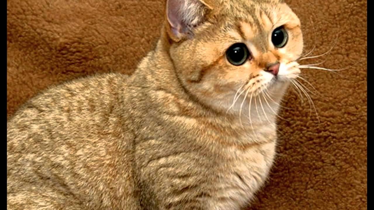 yes CAT, yes HOPE - YouTube