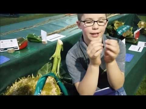Giant Veg: Malvern 2016 UK Giant Vegetable Championship Highlights