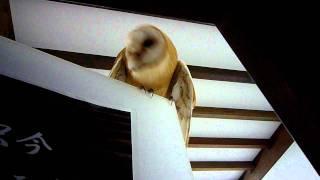 餌鳴きとは、雛が親鳥に餌をねだるときに鳴く鳴き声の こと普通は大人に...